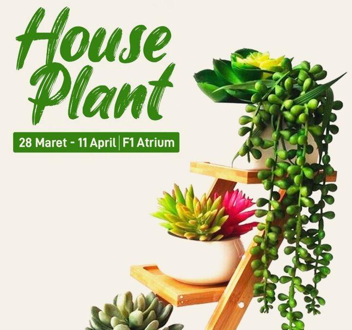 House Plant 28 Maret- 11 April 2021