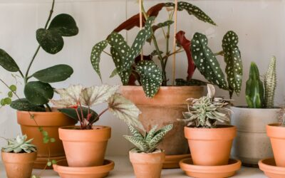 Ornamental Plants Benefits For Health And Well-Being